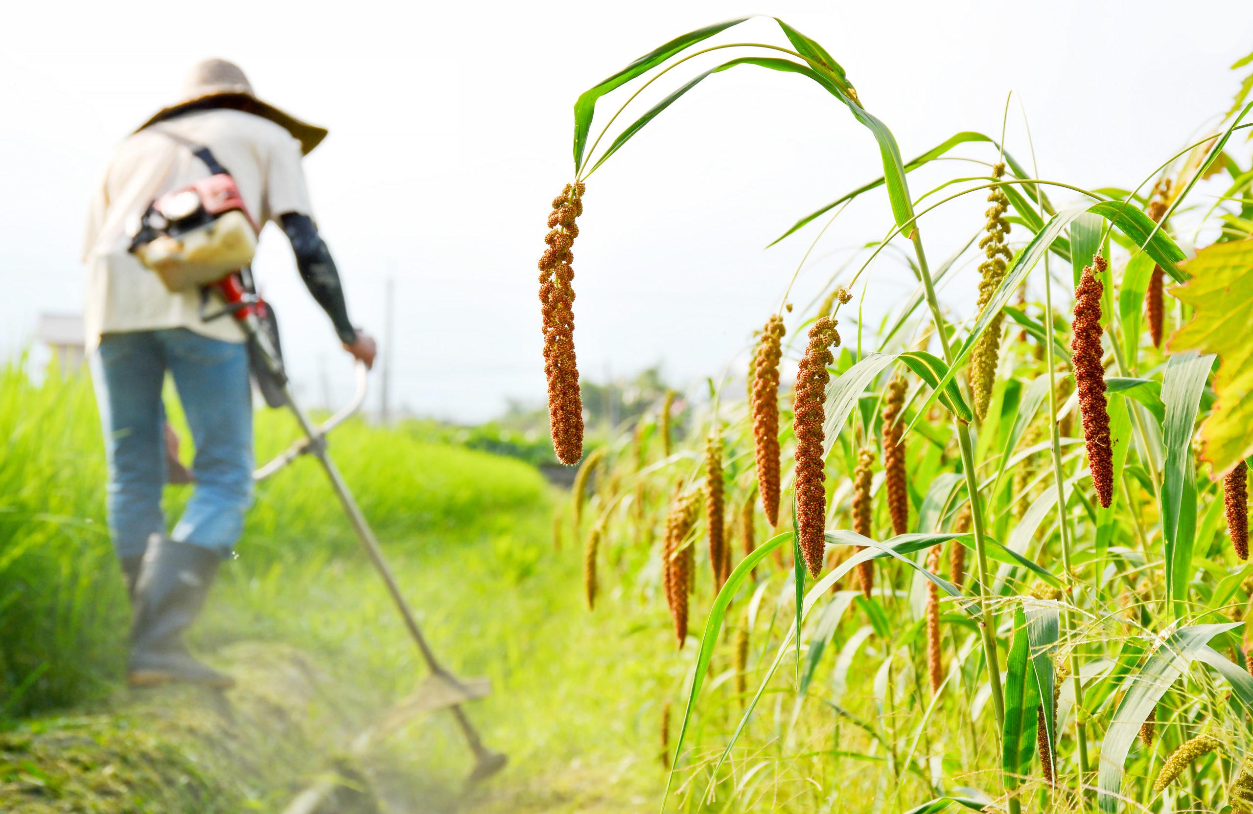 安農小米品牌形象照